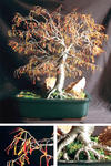 Sal Villano Wire Tree Sculpture - 秋 Bonsai - ワイヤー 木 彫刻 , で Sal Villano